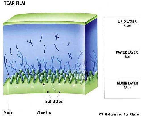 Suzni film: lipidni, vodeni i mucinski sloj
